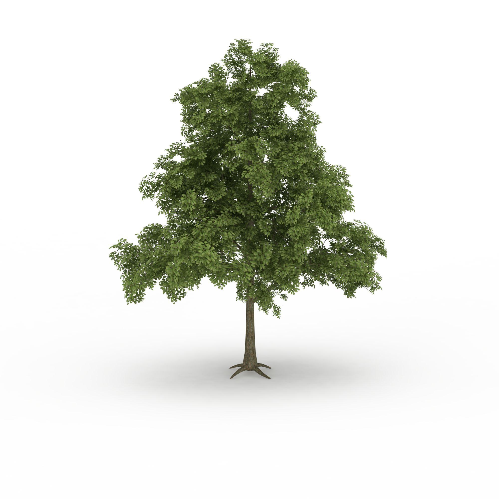 园林装饰树高清图下载