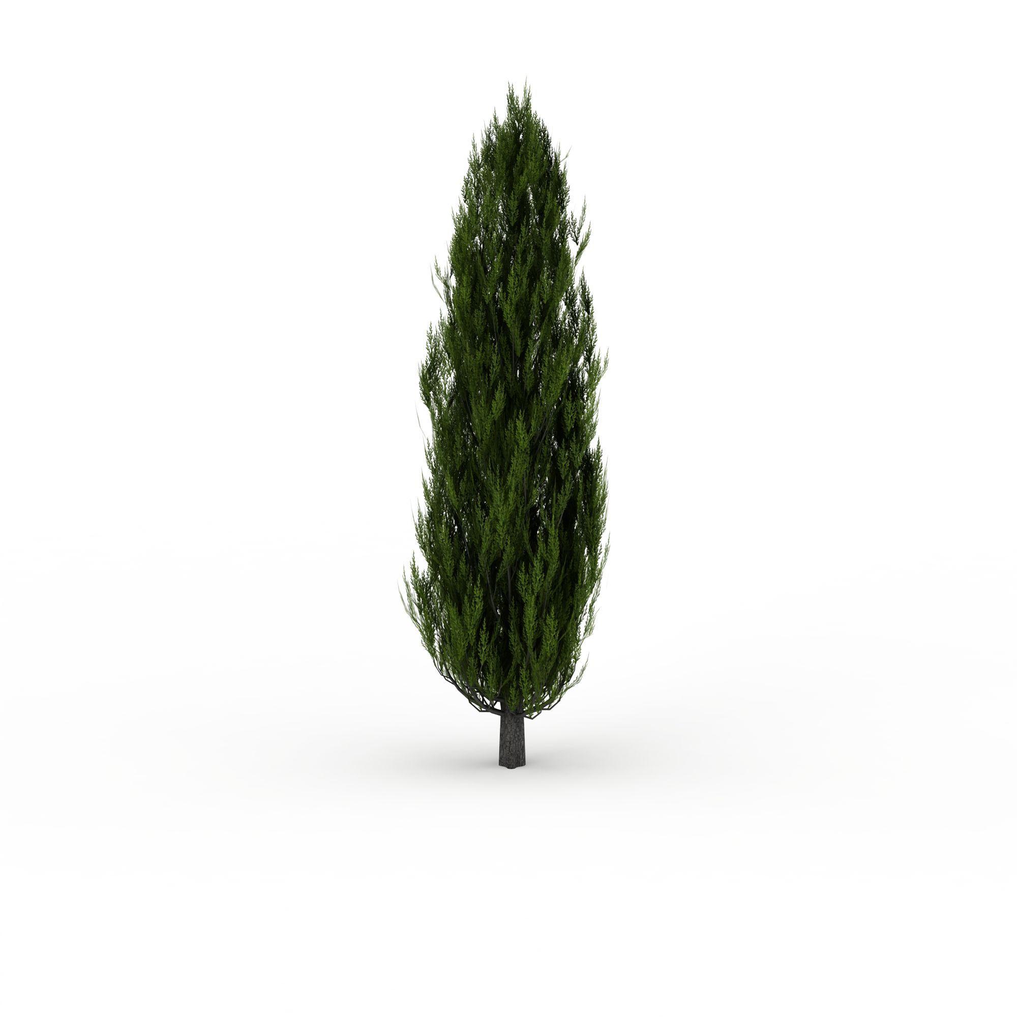 柏树图片_柏树png图片素材_柏树png高清图下载