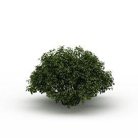 灌木3d模型