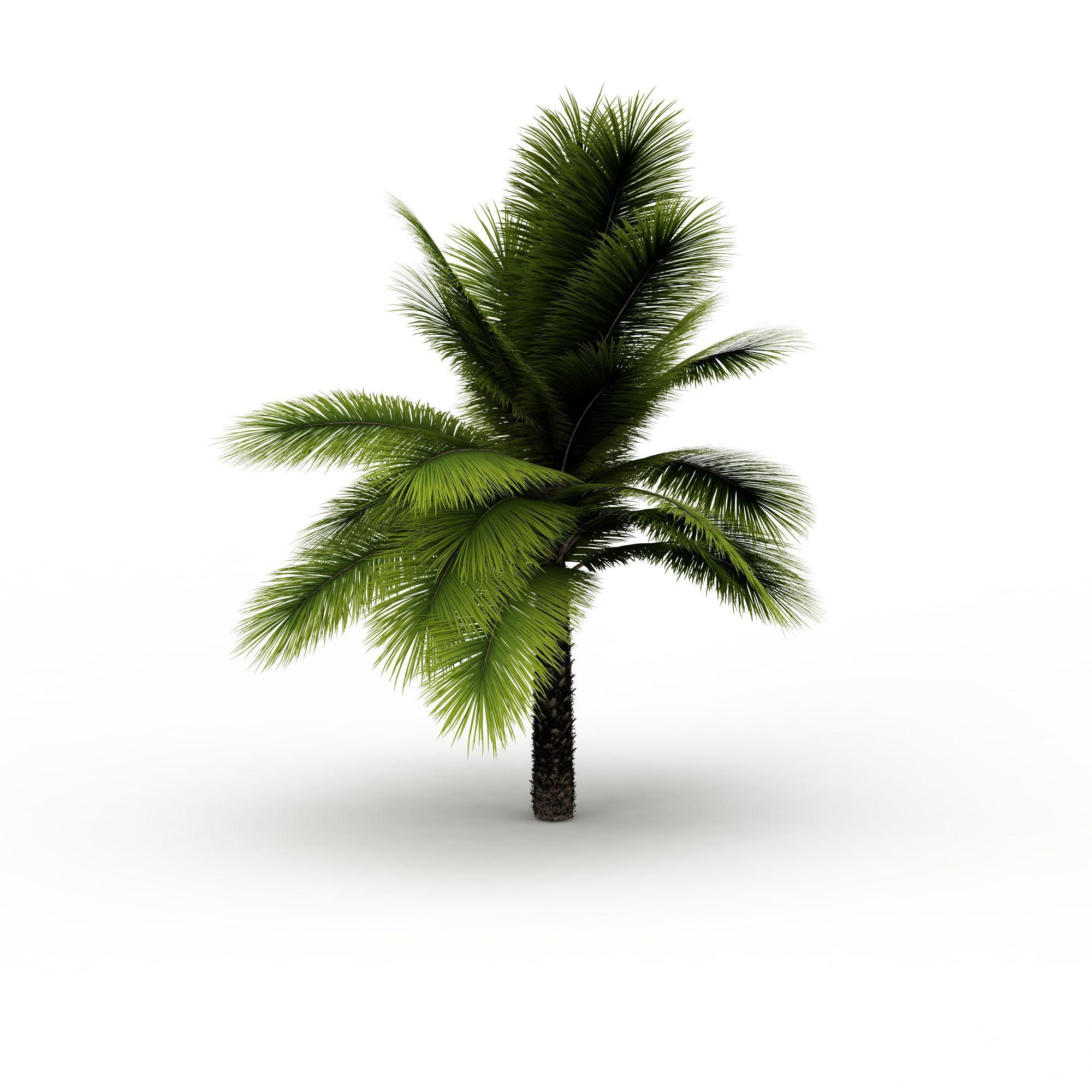 树 热带植物3d模型 热带植物png高清图  热带植物高清图详情 设计师