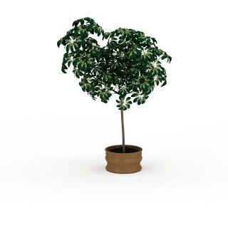 <font class='myIsRed'>盆栽</font>树3d模型