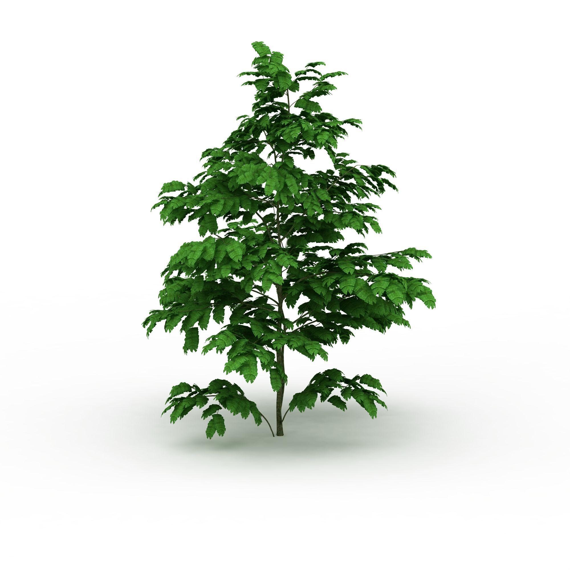 经典树木高清图详情 设计师 3d学院 模型名称 经典树木3d模型 学院id
