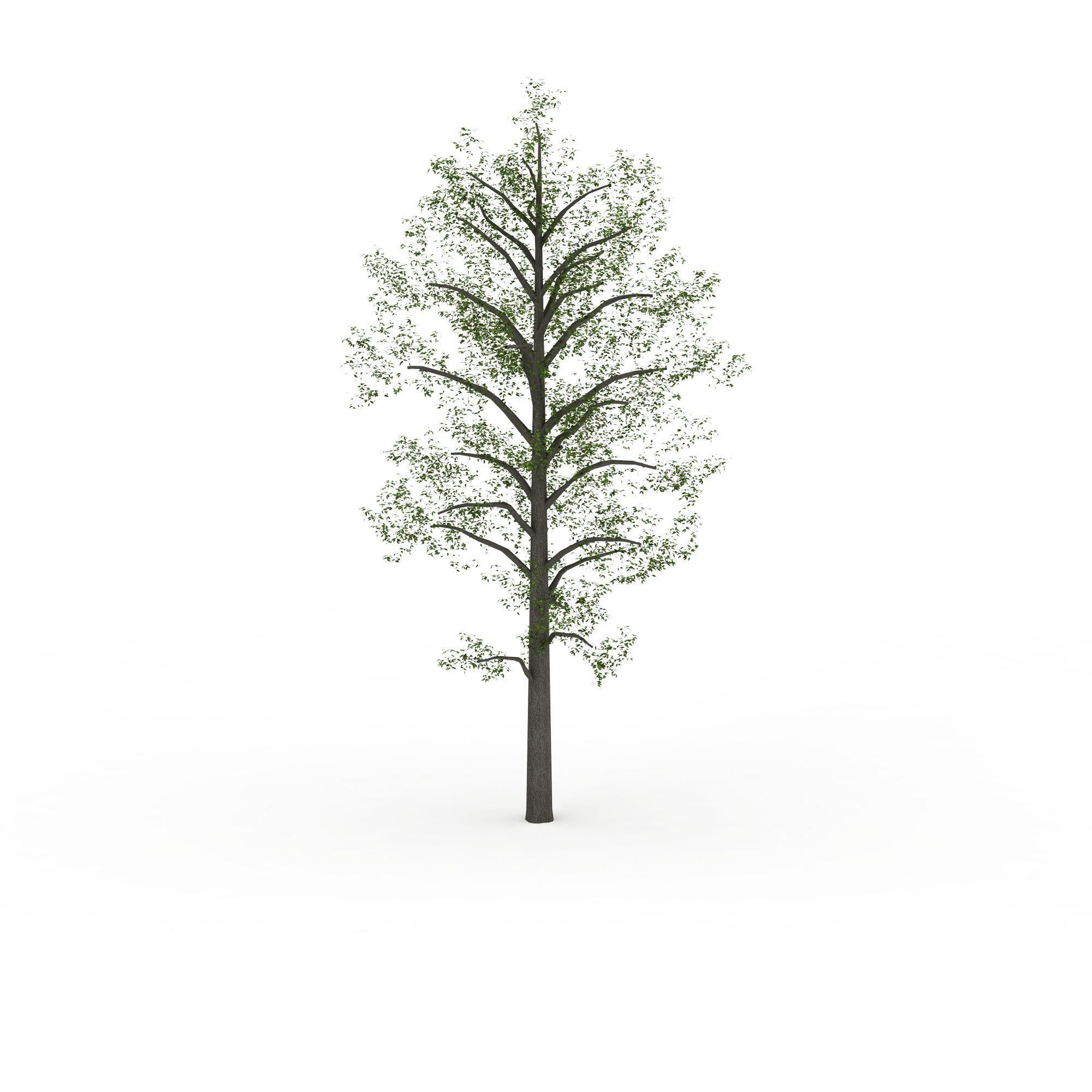 公园树图片_公园树png图片素材_公园树png高清图下载