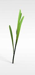 小草模型3d模型