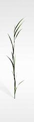 野草模型3d模型