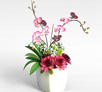 办公室盆花