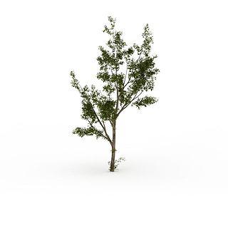 小<font class='myIsRed'>树</font>3d模型