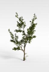 小树模型3d模型