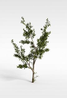 3d小树模型
