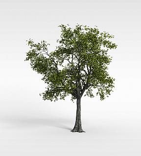 3d绿树模型