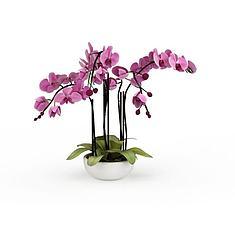 蝴蝶兰3D模型3d模型