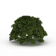 大树3D模型3d模型