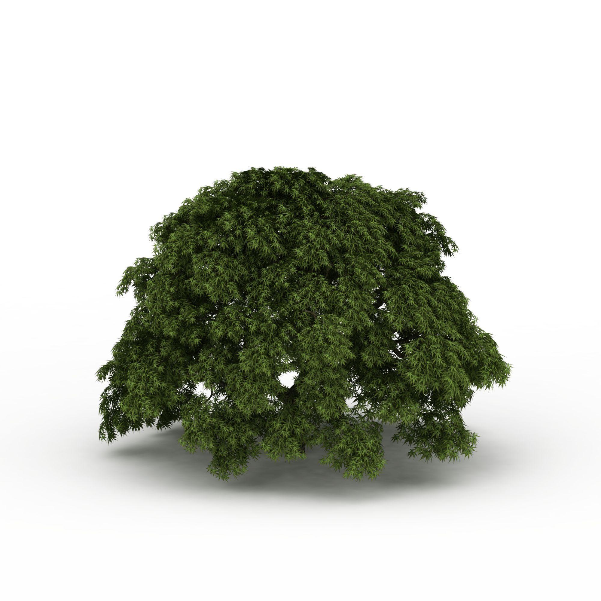 大树图片_大树png图片素材_大树png高清图下载