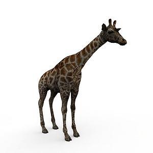 3d<font class='myIsRed'>長頸鹿</font>模型