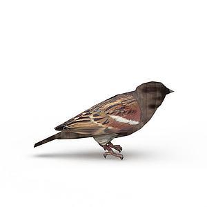 飞行动物鸟模型
