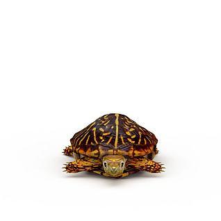 乌龟海龟3d模型