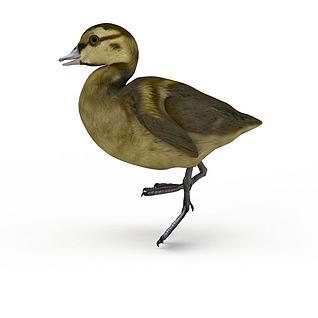飞鸟3d模型