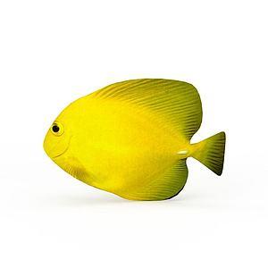黃色小海魚模型
