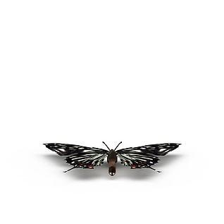 蝴蝶3d模型