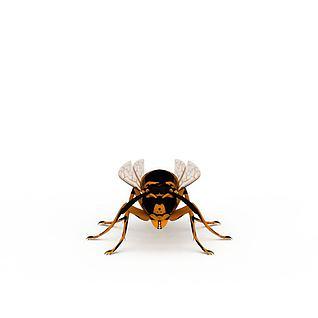 飞行动物虫子飞虫3d模型