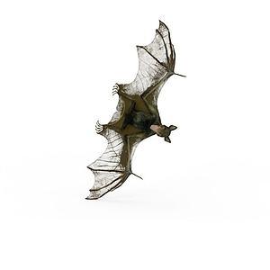 飞行动物蝙蝠夜行动物模型