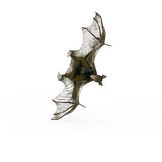 飞行动物蝙蝠夜行动物3d模型
