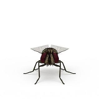 苍蝇3d模型