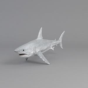 哺乳動物鯨魚鯊魚模型