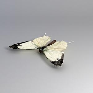 飞行动物飞蛾模型