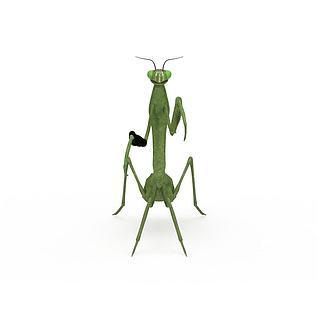 陆地动物螳螂3d模型