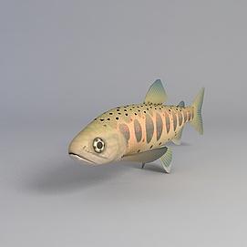 多彩海鱼模型