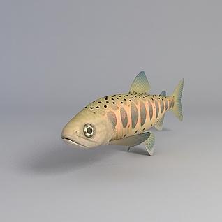多彩海鱼3d模型