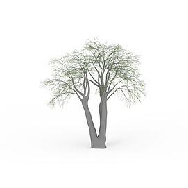 园林树木3d模型