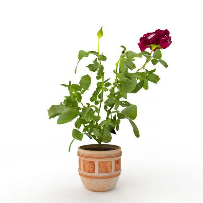 玫瑰花3d模型