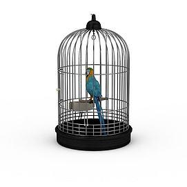 蓝黄金刚鹦鹉3d模型