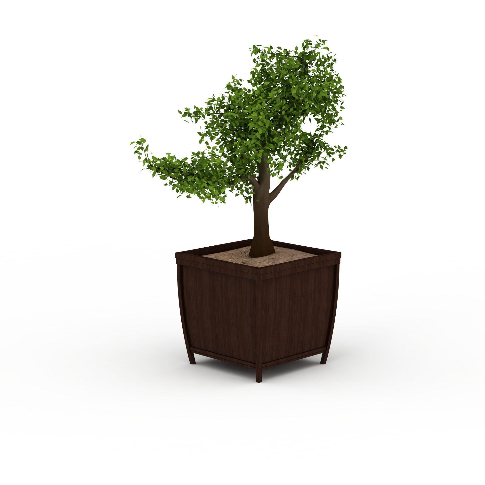 植物 树 室内盆栽3d模型 室内盆栽png高清图  室内盆栽高清图详情