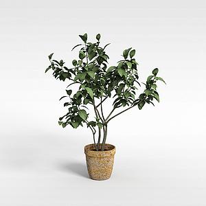 室内盆栽模型
