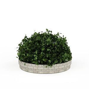 公园灌木模型