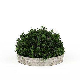 公园灌木3d模型