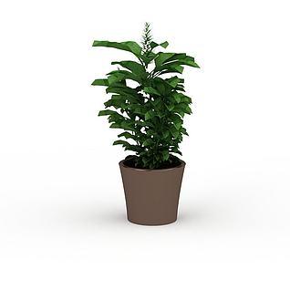 办公室灌木3d模型