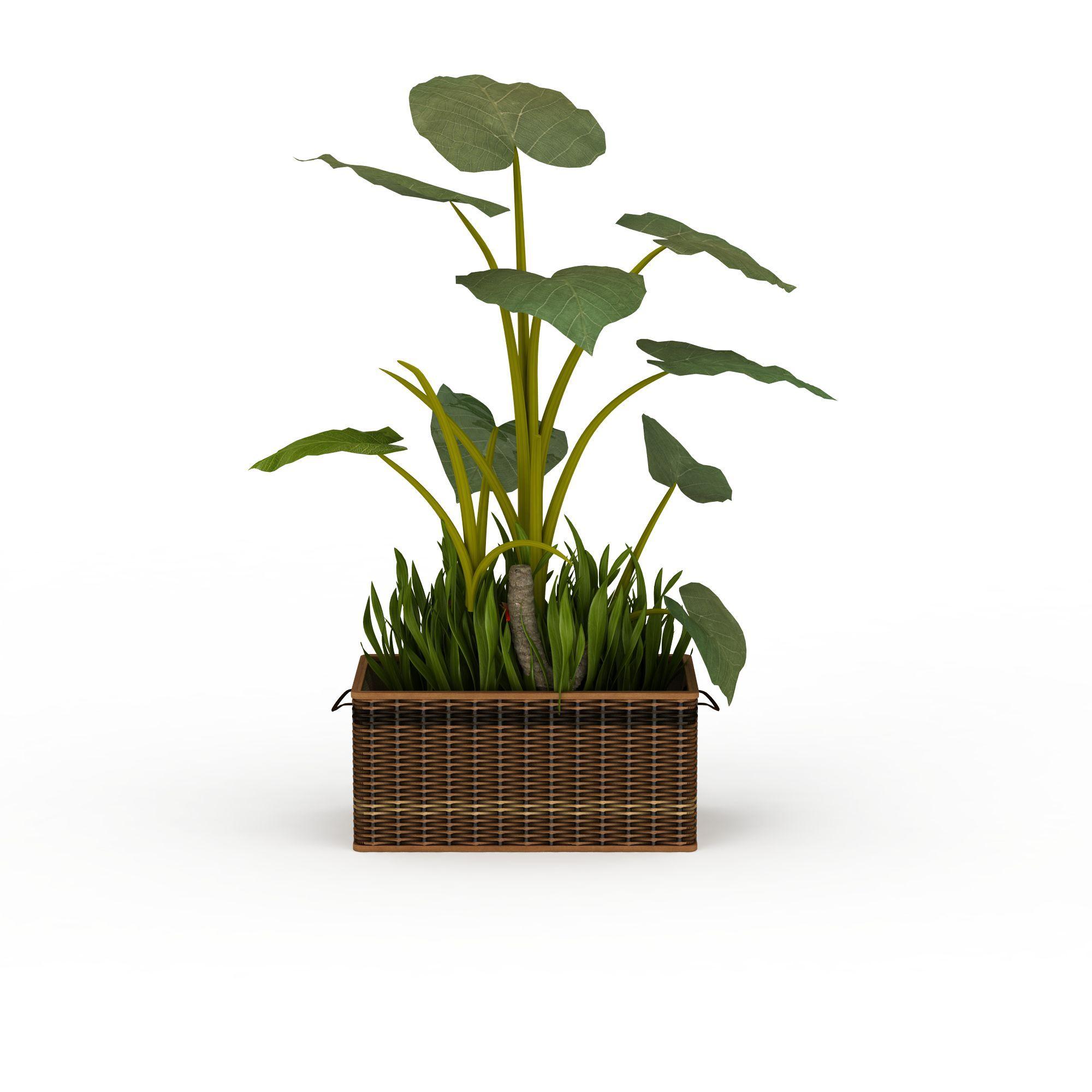 植物 树 室内盆栽3d模型 室内盆栽png高清图