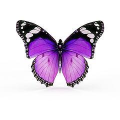彩色蝴蝶模型3d模型