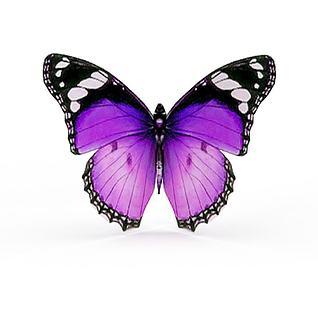 彩色蝴蝶3d模型