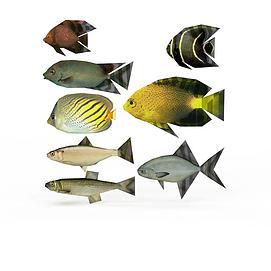 一群鱼模型