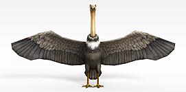 3d<font class='myIsRed'>游戏</font>鸵鸟兽模型