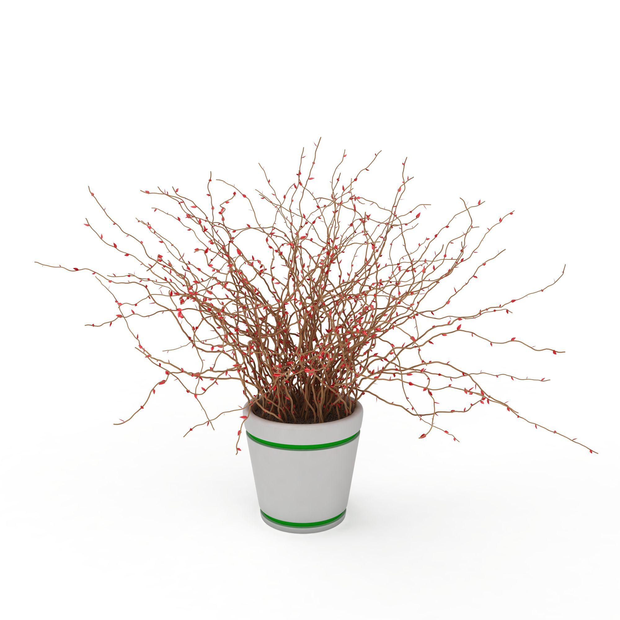 植物 花草 室内装饰盆景3d模型 室内装饰盆景png高清图  室内装饰盆景