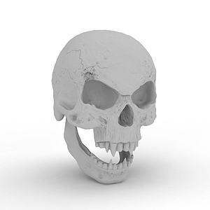 头骨模型3d模型