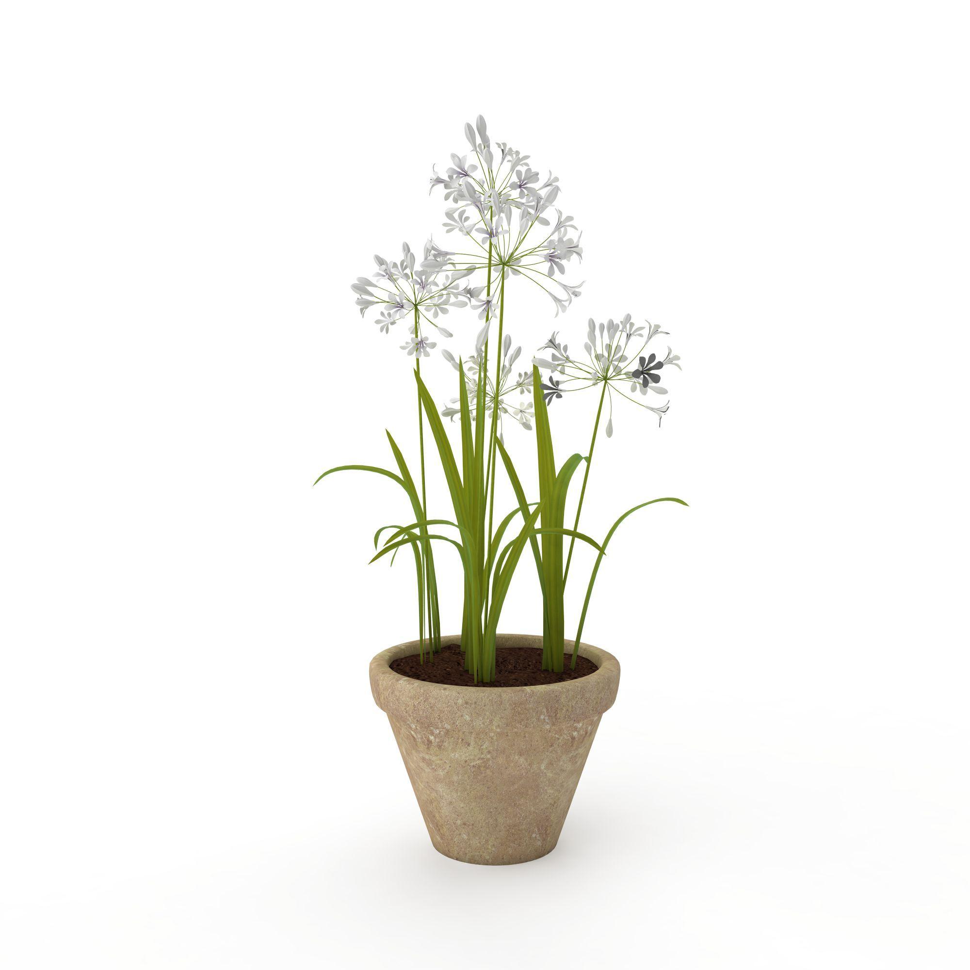 室内盆栽植物图片_室内盆栽植物png图片素材_室内盆栽