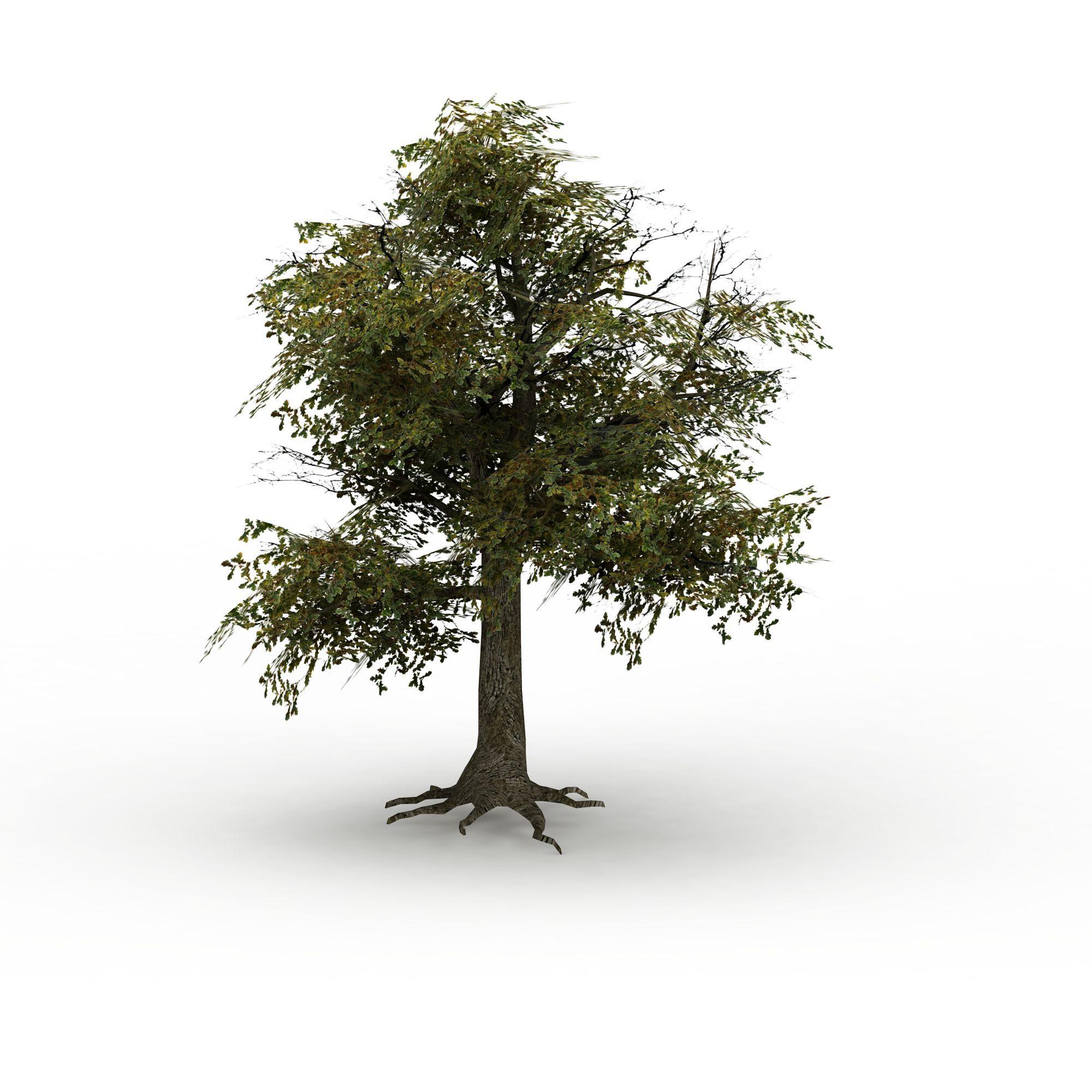 树木png高清图  树木高清图详情 设计师 3d学院 模型名称 树木3d模型