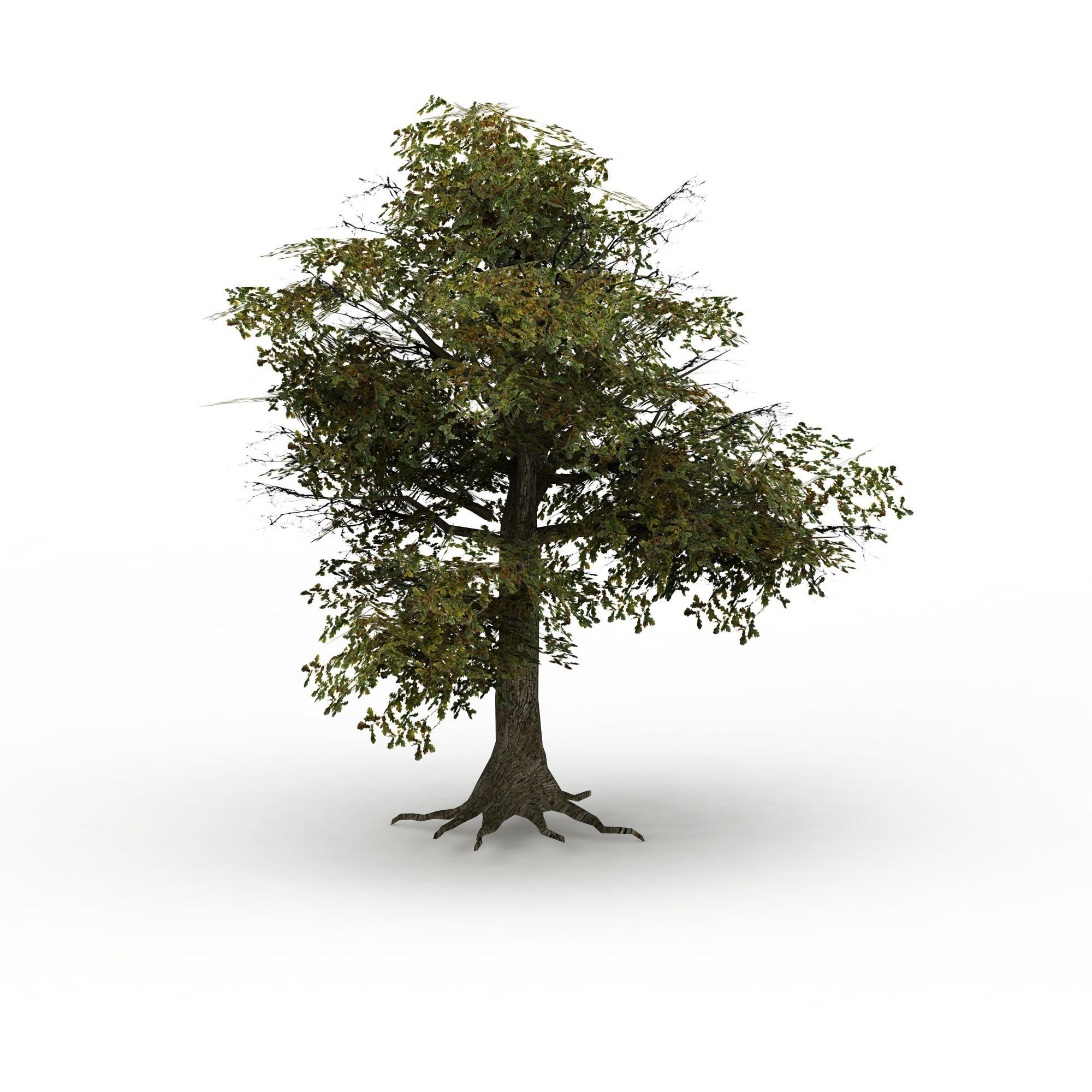 树木高清图下载